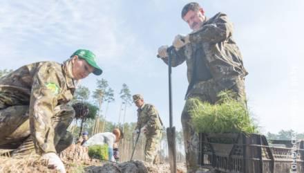 Председатель облисполкома Геннадий Соловей принял участие в посадке леса в Гомельском районе