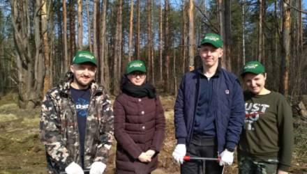 На Гомельщине сотрудники природоохранных инспекций высадили более 60 тысяч деревьев в лесах