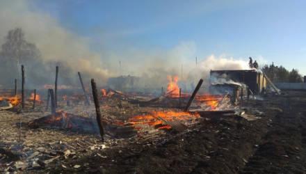 Ващенко назвал основную причину пожаров в Гомельской области