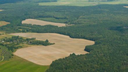 В Беларуси вводят запрет на посещение лесов. Гомельская область в приоритете
