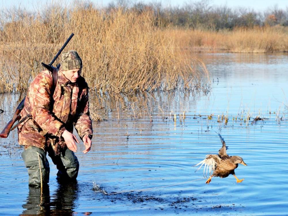 открытие охоты на утку в ульяновске картинка это