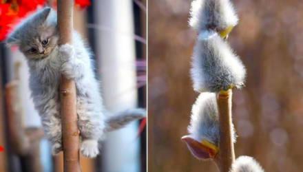 Апрель в Беларуси ожидается теплее обычного