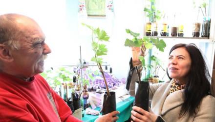 Виноградари Гомельщины готовятся к посадке лозы в грунт – фотофакт
