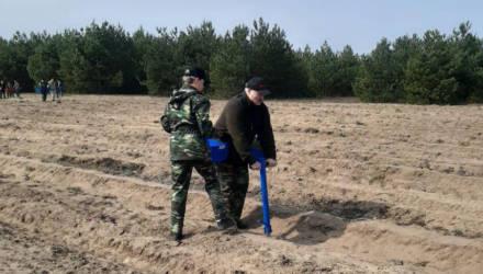 Лукашенко в субботник работает на посадке деревьев в Петриковском районе