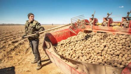 Запасов продуктов в стабфондах Гомельской области хватит до нового урожая
