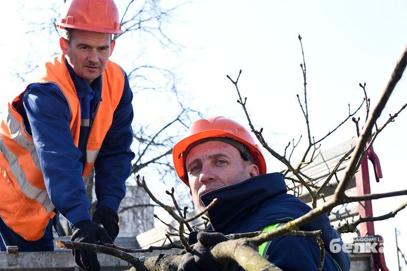 Плюс 1100 клёнов и лип. «Кирмаш» идёт на рекорд по посадке деревьев в Гомеле