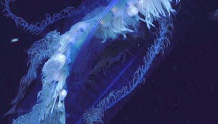 Биологи отказывались верить, насколько огромным был глубоководный пришелец, попавший на их видео