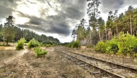 Незаконные премии в сотни тысяч за фиктивный перевод лесов в ценные категории. Прокуратура Гомельщины возбудила уголовные дела за нарушения в лесхозах