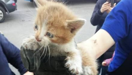 Белорусские спасатели пришли на помощь котятам, застрявших под капотом машины