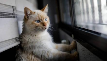 У кошки в Москве нашли коронавирус и поместили на карантин по месту жительства