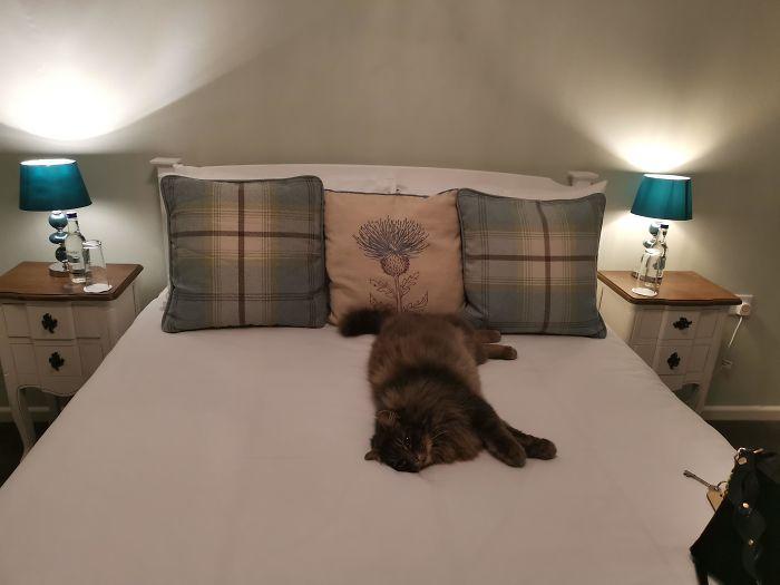 Кот в доме хозяин: 15 пушистых наглецов, которые спят исключительно на кровати