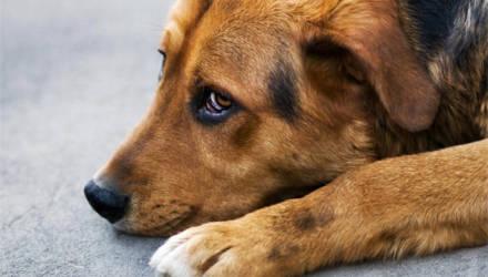 Житель Житковичского района трижды ударил топором собаку на глазах у хозяина