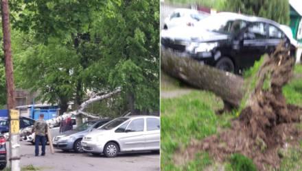 Чудеса. В Гомеле сильный ветер повалил два дерева в сантиметрах от припаркованных авто