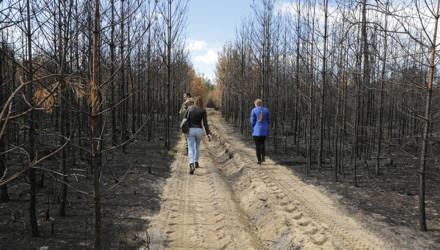 Ожоги несовместимые с жизнью: что делают со сгоревшим лесом на Гомельщине