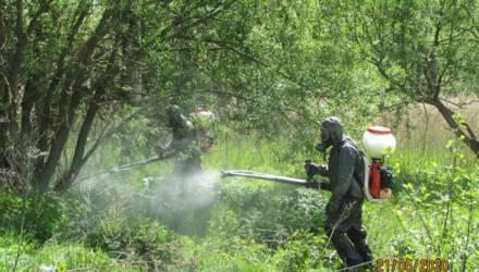 В Гомельской области мероприятия по уничтожению борщевика Сосновского проведены на площади 40,94 га