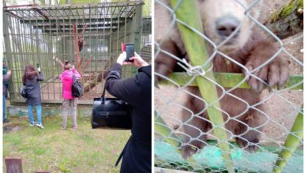«Приехала комиссия — человек 15». Медвежонка, который прибился к дому фермера, забрали в заповедник