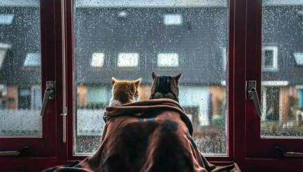 Дожди и прохладная погода сохранятся в Беларуси до середины мая, возможен мокрый снег