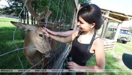 """В сафари-парке Национального парка """"Припятский"""" на Гомельщине обитают около 300 животных"""