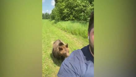 Парень снял, как за ним гонится голодный медведь, но концовка оказалась невероятно милой