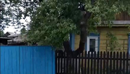 Дикий случай: на Гомельщине мужчина зарубил собаку топором, дети сняли видео