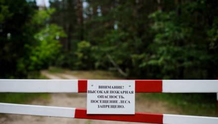 Запрет на посещение лесов продолжает действовать только в Гомельской области