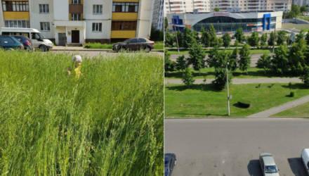 """""""Главное, это показуха"""". Гомельчанин возмутился высокой травой во дворе и, как водится, скинул в соцсети, но дальше всё пошло не по плану"""