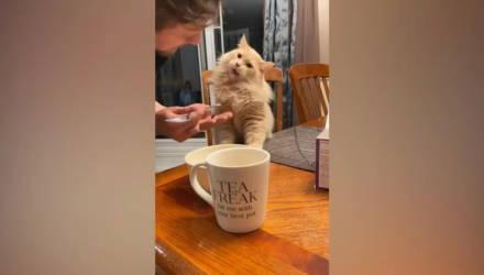 Хозяйка сняла реакцию кота, который впервые попробовал мороженое, и это невероятно смешно