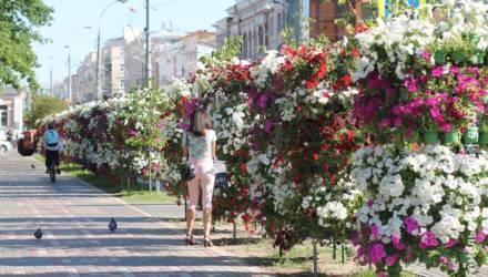 Стена из петуний. В Гомеле улицу Советскую украсили вертикальными цветочными композициями