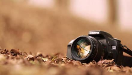 Фотограф искал леопарда, но нашёл сову, которую невозможно увидеть. И фото с ней способно сломать вам глаза