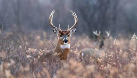 Можно ли собирать в лесу на Гомельщине рога диких животных?