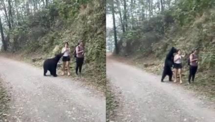 Туристы сняли, как к ним приближается чёрный медведь, но последующие события удивили их ещё больше