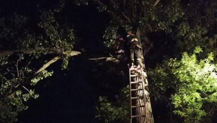 В Калинковичах мужчина полез на дерево за попугаем и не смог спуститься
