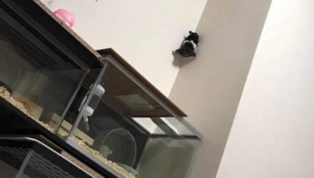 Фото хомяка, который задумал дерзкий побег прямо по стене, сделало его знаменитостью на всю жизнь