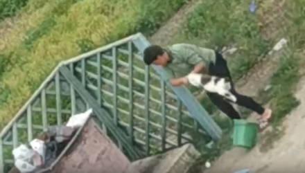Жительницу Буда-Кошелёвского района оштрафовали на 675 рублей за жестокое убийство кошки
