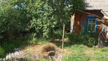 Убийство на Гомельщине: думали, пропал в грибах, оказалось – зарезали ножом и закопали