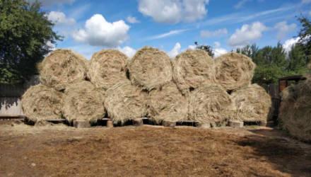 Расхитители и несуны: что крадут в сельхозпредприятиях Гомельской области