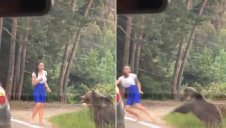 Дикий медведь проучил назойливую туристку, решившую устроить с ним фотосессию — видео