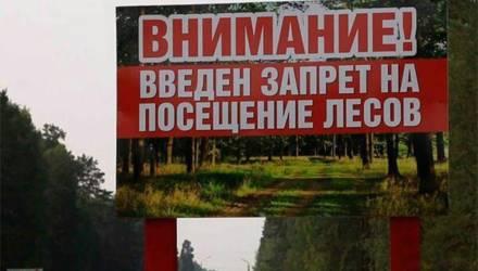 Ограничения на посещение лесов сохраняются в четырёх районах Беларуси – все на Гомельщине