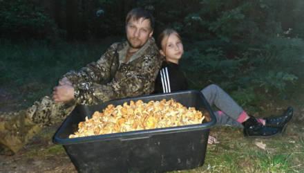 На Гомельщине семья собрала 90 литров лисичек за 3,5 часа!
