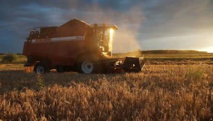 13-часовой рабочий день, пыль столбом и почти тысяча зарплаты: как на Гомельщине комбайнёры убирают хлеб