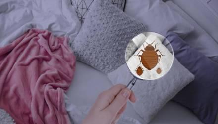 Ласковый кровопийца. Чем страшен новый вид клопов, обитающий в ваших постелях