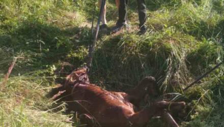 На Гомельщине работники МЧС спасли лошадь, которая провалилась в колодец