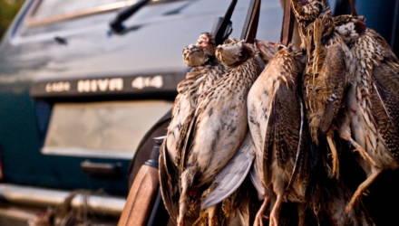 Сезон массовой охоты на пернатую дичь открывается 8 августа