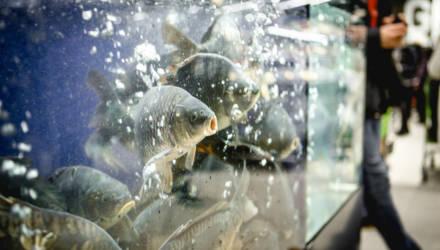Green в Гомеле обрушит цены на рыбу. Выясняем, на что и на сколько
