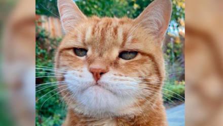 У кота настолько выразительная морда, что его фото можно отправлять вместо недовольного смайлика