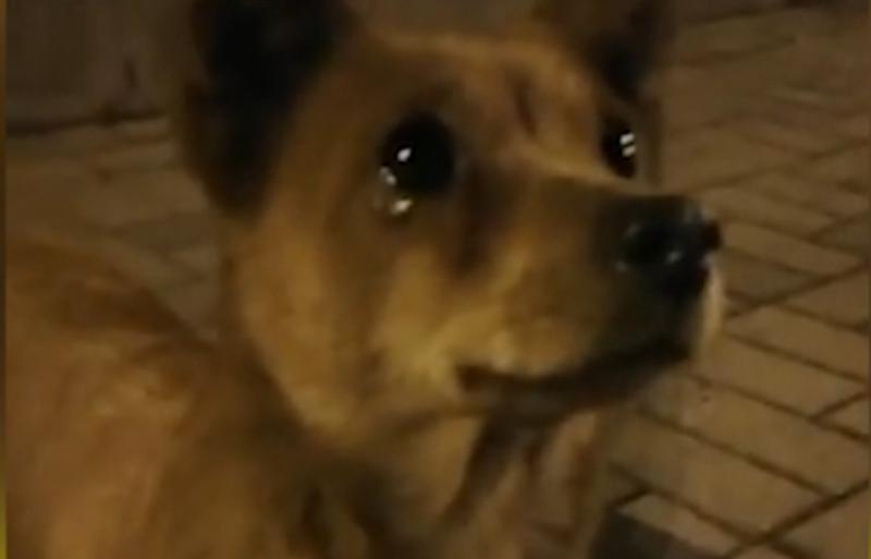Девушка на улице покормила бродячего пса, и тот заплакал от счастья — доброе видео