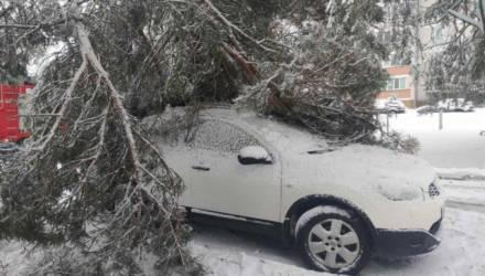 Последствия «Ларса»: более 2200 обесточенных пунктов, упавшие деревья, подтопленные дома и застрявшие машины