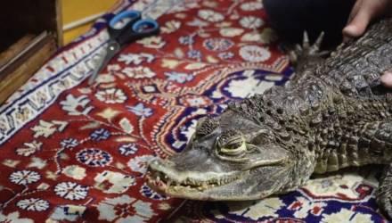 В квартирах хотят запретить держать некоторых животных. В планах — и ограничения по контактным зоопаркам