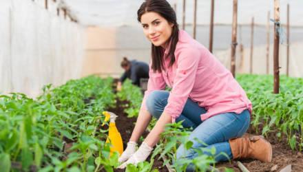 Посадки с первых чисел месяца: лунный календарь садовода-огородника на февраль
