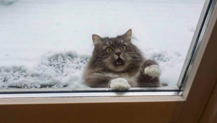 В Гомеле Крещенские морозы до -25 градусов ожидаются на несколько дней раньше